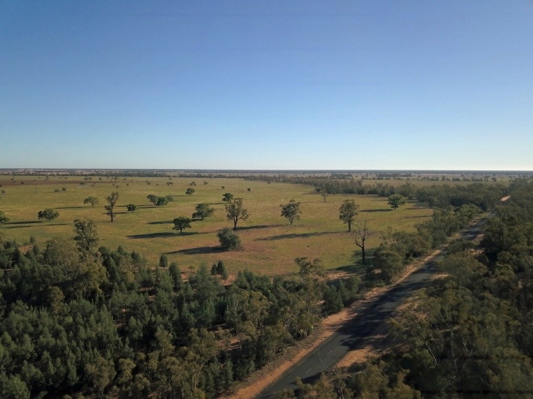 Pilliga Forest Coonamble